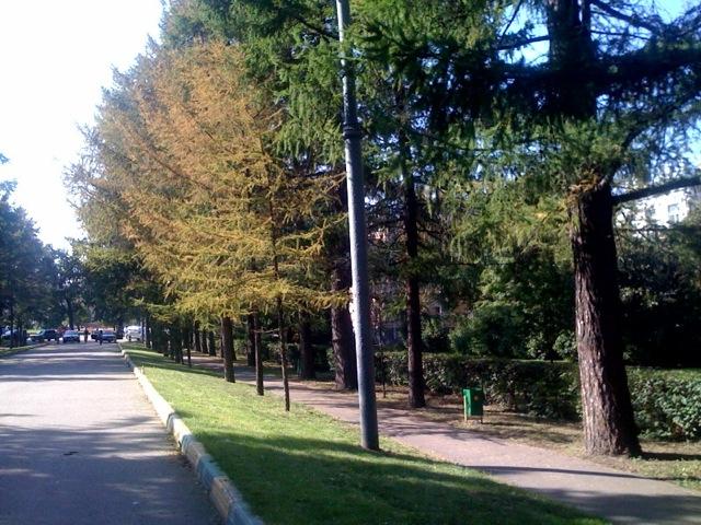 http://chebotar.ru/stuff/2009/09/leto4.jpg