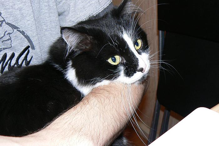 Кот (3)