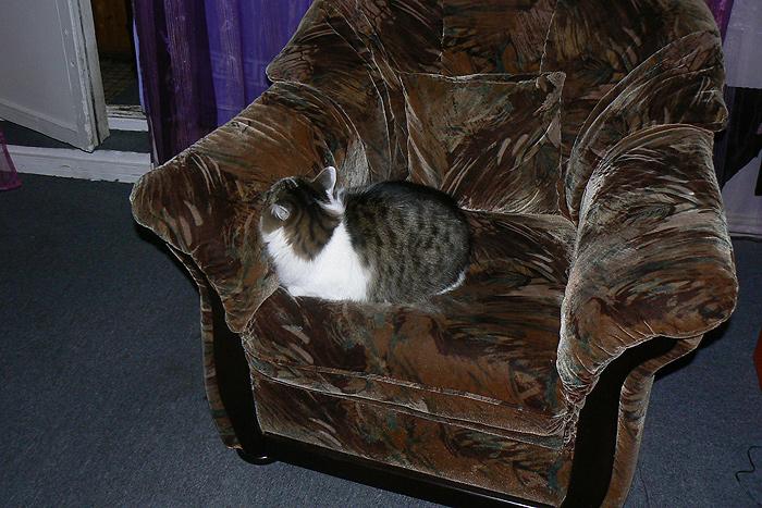 Кот (4)