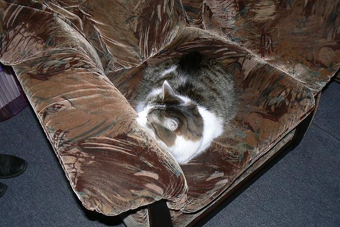Кот (5)